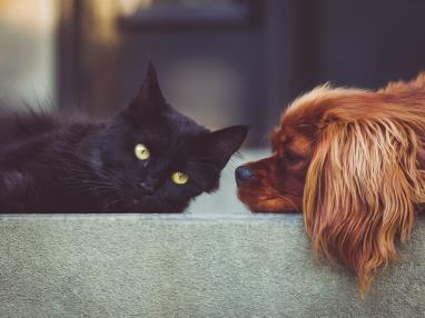 Se Admiten Mascotas